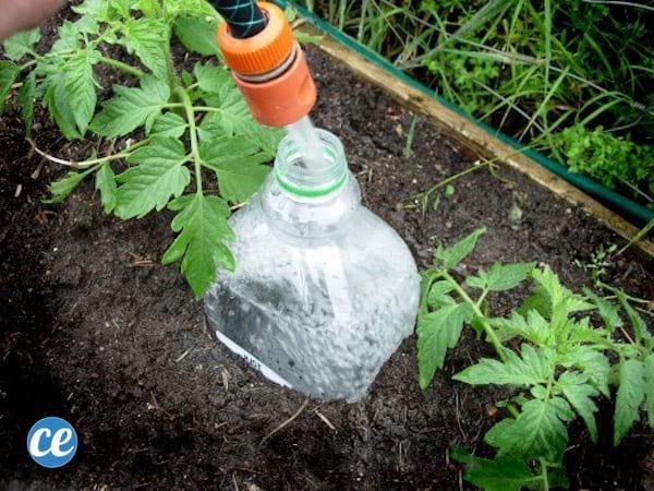 10 secrets de jardinier pour faire pousser de belles et grosses tomates facilement. Black Bedroom Furniture Sets. Home Design Ideas