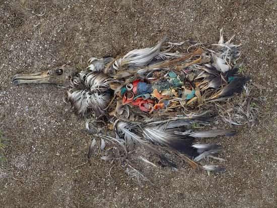 le plastique ne se décompose pas et est mangé par les animaux