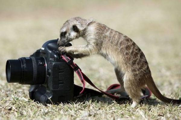 appareil photo à louer entre particuliers