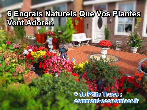 6 engrais naturels que vos plantes vont adorer - Marc de cafe engrais pour quelles plantes ...