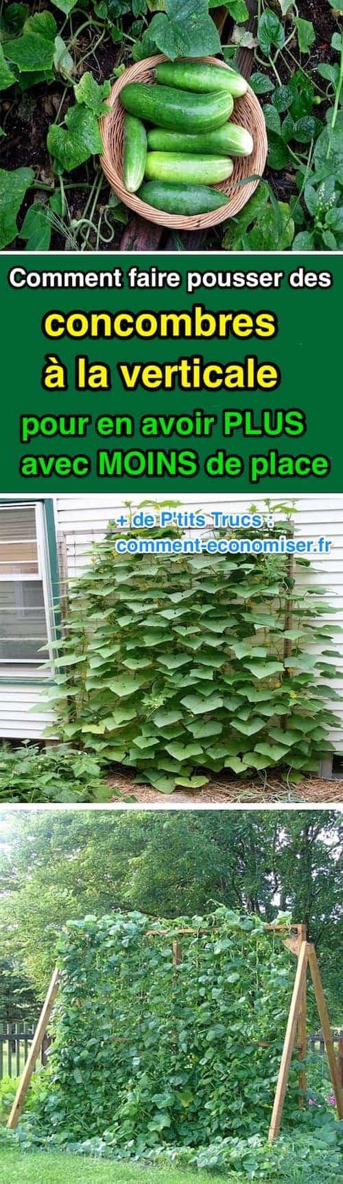 faire pousser les concombres verticalement