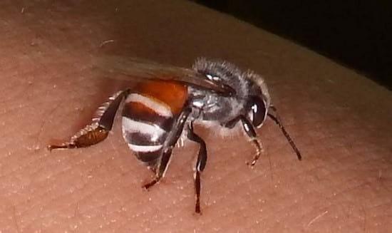 piqure abeille comment faire pour soulager