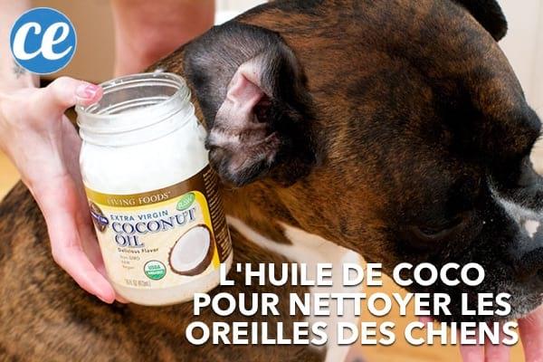 De l'huile de coco pour nettoyer les oreilles d'un chien.