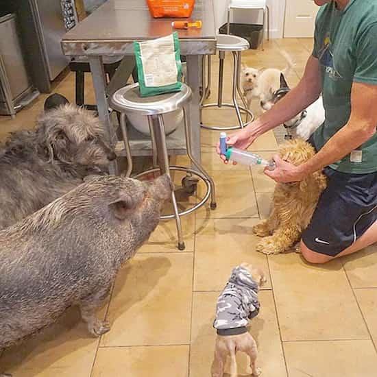 adoption des vieux chiens et soins qu'ils nécessitent