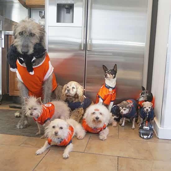 sauvetage de 10 chiens âgés dans un refuge par un seul homme