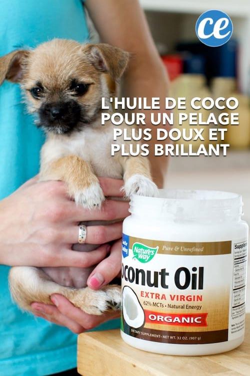 L'huile de coco est bonne pour le pelage des chiens.