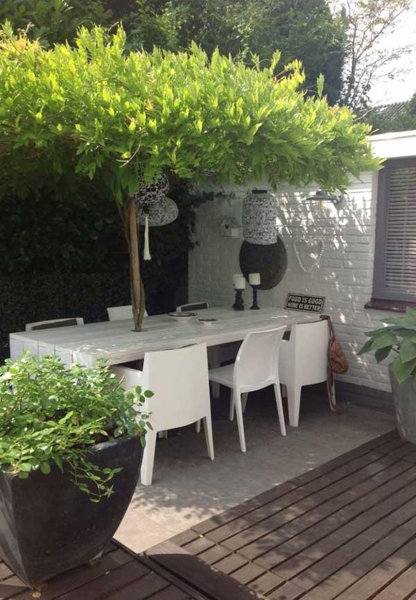une vigne sert de parasol pour ombrager une terrasse