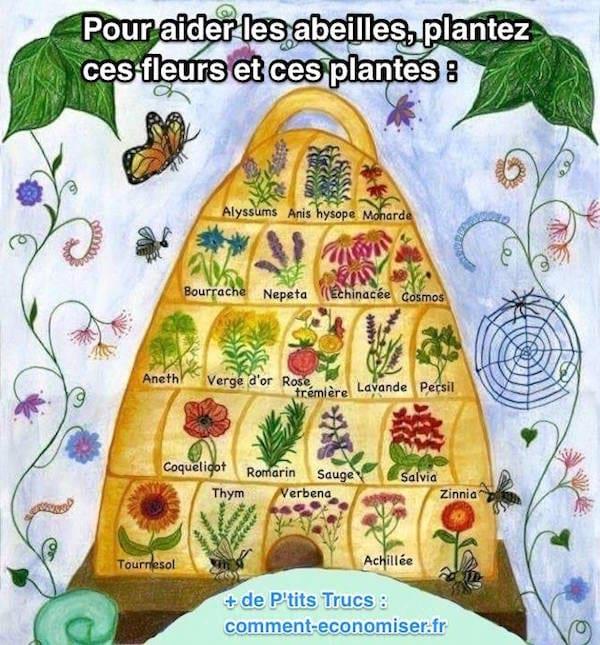 Plantes et fleurs à planter dans le jardin pour sauver les abeilles