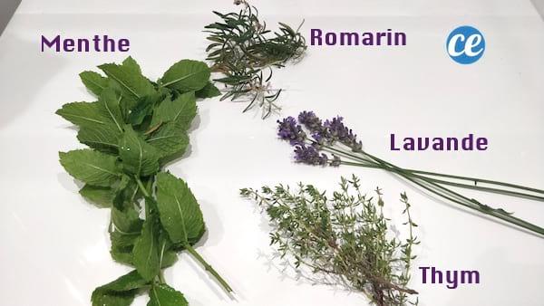 recette décoction plante produit nettoyant désinfectant bio