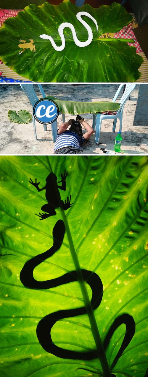 Utilisez des animaux en plastique pour faire des photos