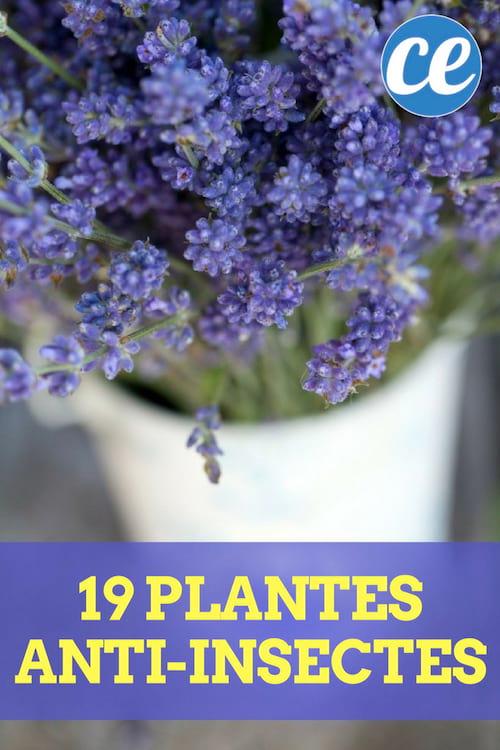 19 plantes pour protéger votre jardin et votre maison.