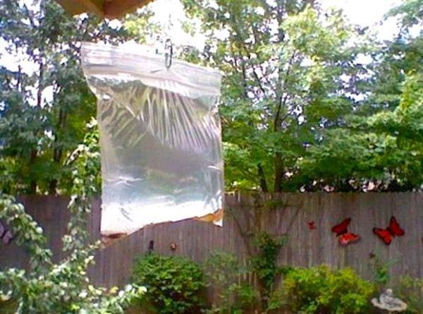 Un sac d'eau avec des pièces suspendu éloigne les mouches.