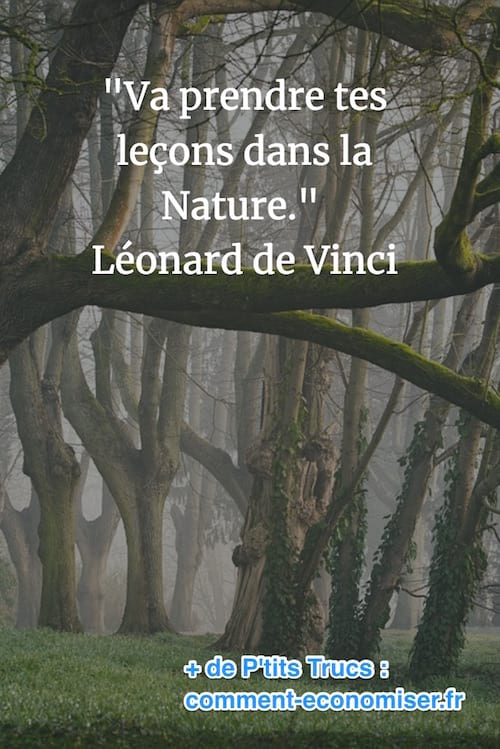 citation de léonard de vinci sur la nature