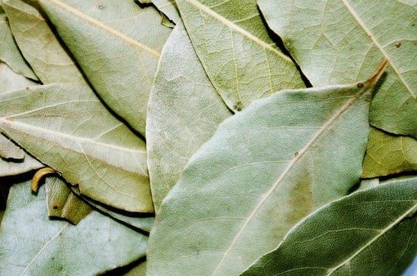 Les feuilles de laurier sont un répulsif naturel contre les insectes