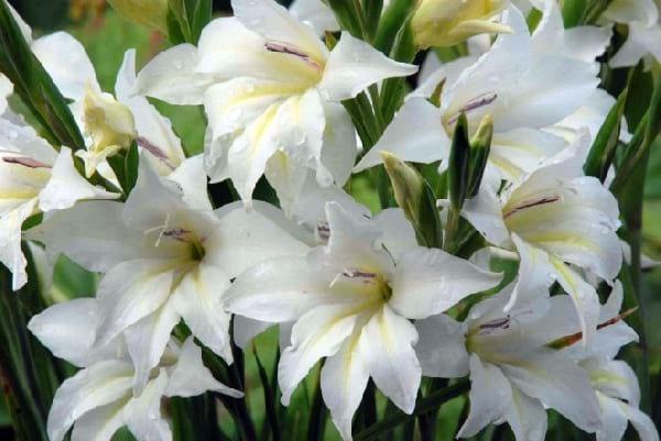 Creez Votre Jardin Magique Avec Ces 11 Plantes Qui Ne Fleurissent