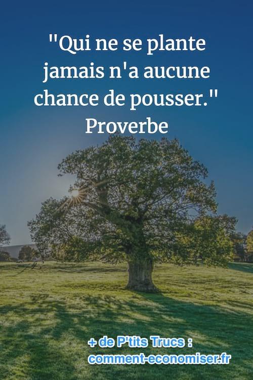 proverbe sur les racines