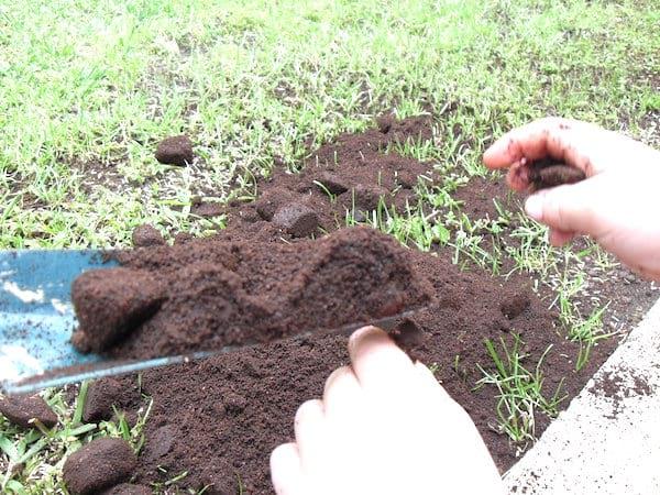 du café pour améliorer la teneur en azote du sol