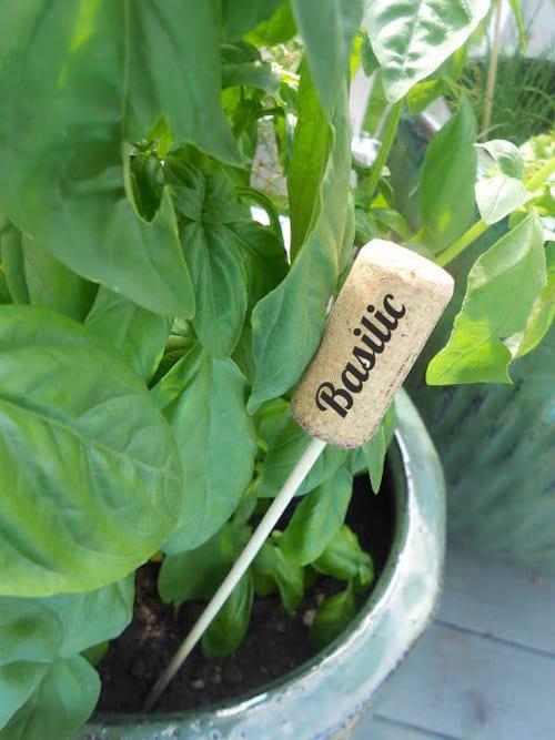 Bouchon en liège transformé en étiquette à semis