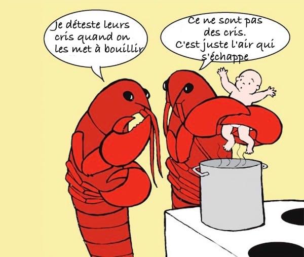 un homard fait cuire un humain