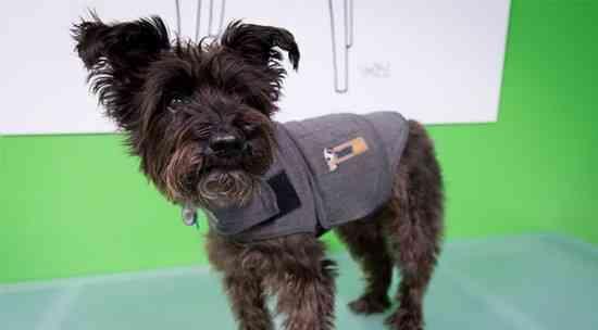 manteau anti orage chien peur orage