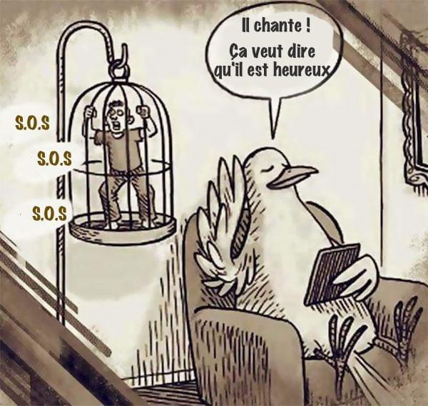 oiseau qui écoute chanter un humain en cage