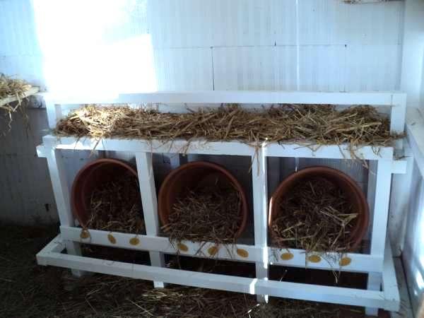 nichoirs pour poules pot en terre cuite