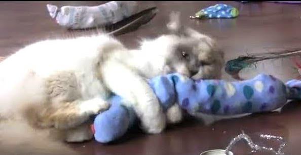 jouet pour chat fait maison avec une chaussette
