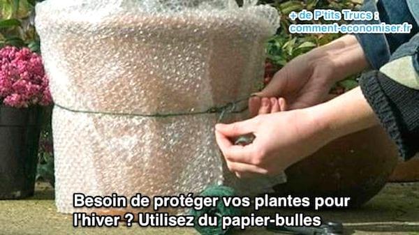 protéger les arbustes avant l'hiver