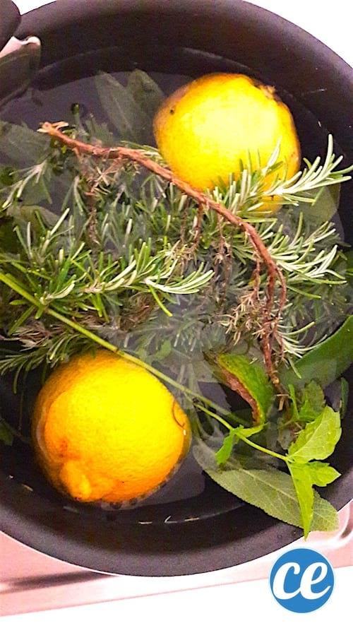 une décoction désodorisante aux herbes aromatiques et aux écorces d'agrume