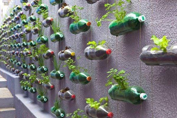 Recycler bouteille en plastique en jardin verticale