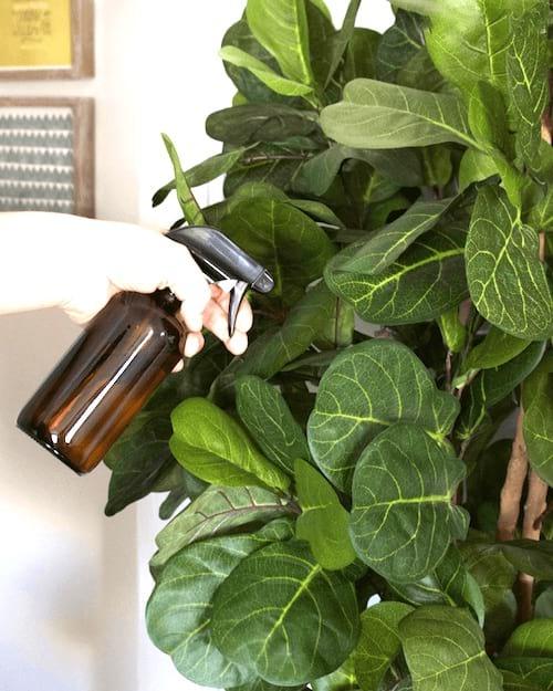 eau oxygénée pulvérisée sur plantes vertes