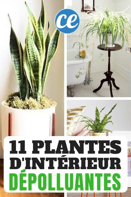 11 plantes d'intérieur dépolluante, résistantes et faciles d'entretien