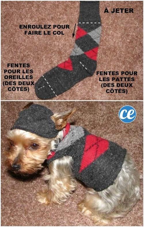 Une chaussette recyclée pour faire un manteau pull pour un petit chien