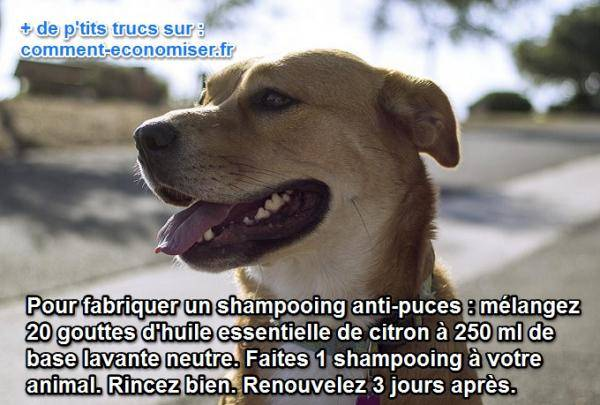 un anti puce naturel pour les chiens et chat