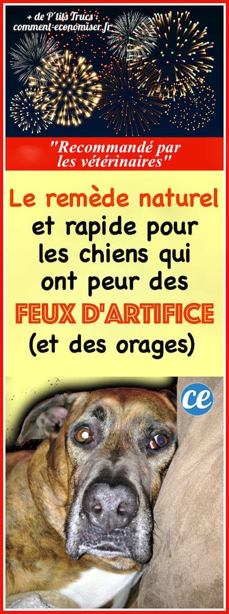 un remède naturel pour les chiens qui ont peur des feux d'artifice et des orages