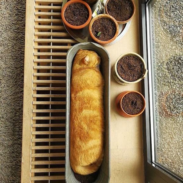 chat roux qui dort dans un pot de fleurs