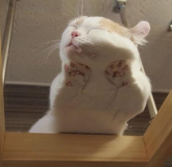 chat-dort-contre-la-vitre