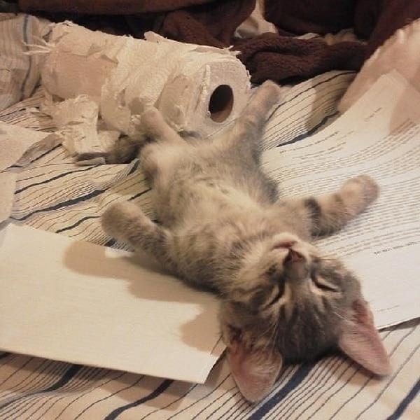 chat-fatigue-apres-jeu