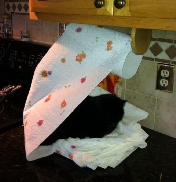 chat-qui-dort-dans-papier-absorbant