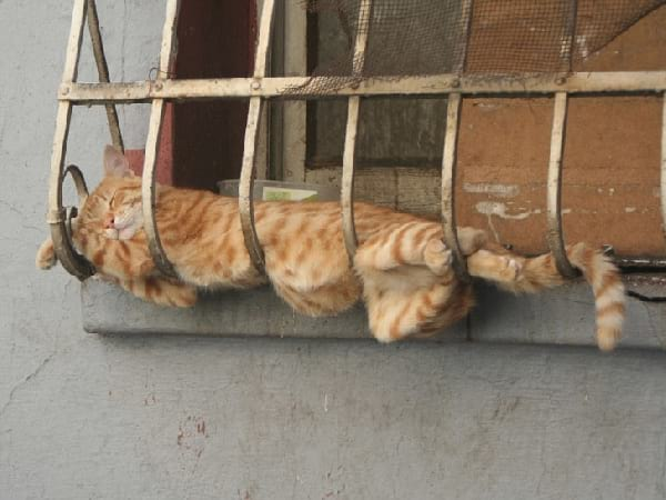 chat-qui-dort-sur-grille-fenetre