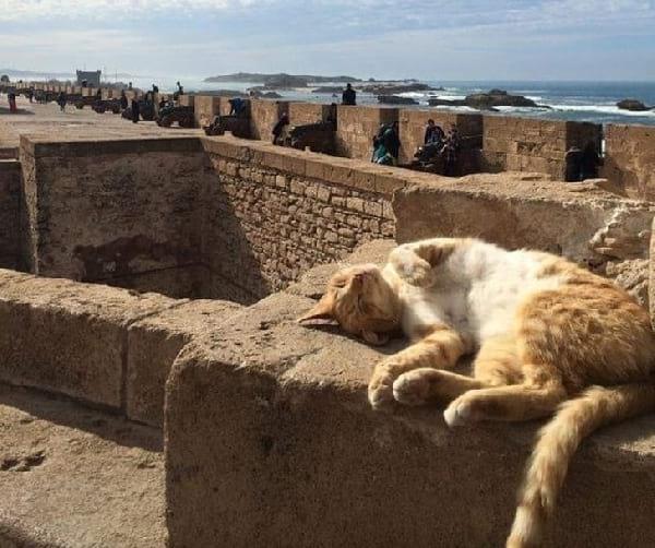 chat-se-prelasse-au-soleil