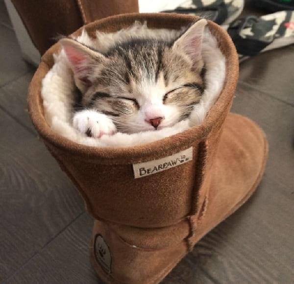 chaton-dort-dans-bottines-fourrees