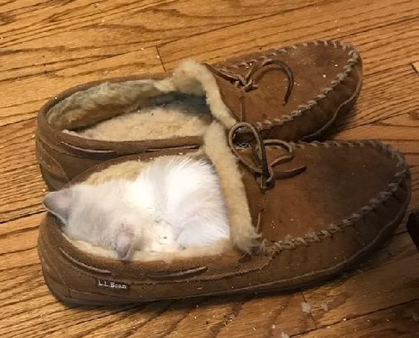 chaton-dort-dans-pantoufle