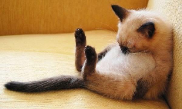 chaton-qui-ronfele