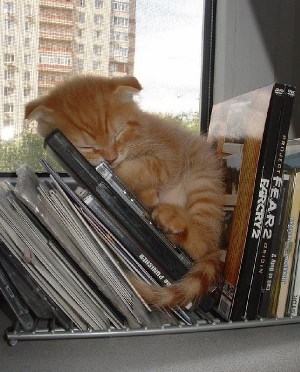 chaton-roux-dort-dans-cd