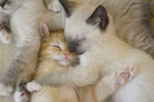 deux-chatons-soeurs-qui-dorment