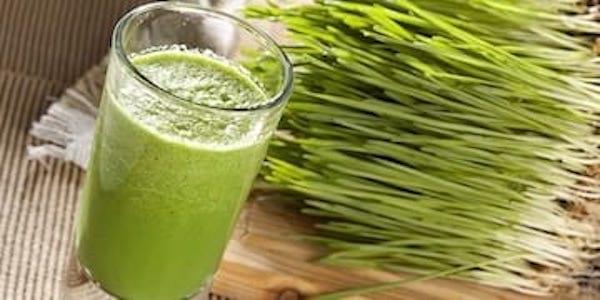 Découvrez le gargarisme au jus d'herbe de blé pour soigner vos maux de gorge.