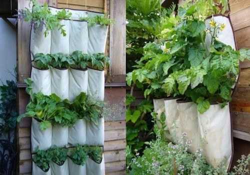 Utilisez un rangement à chaussures pour faire pousser herbes aromatiques