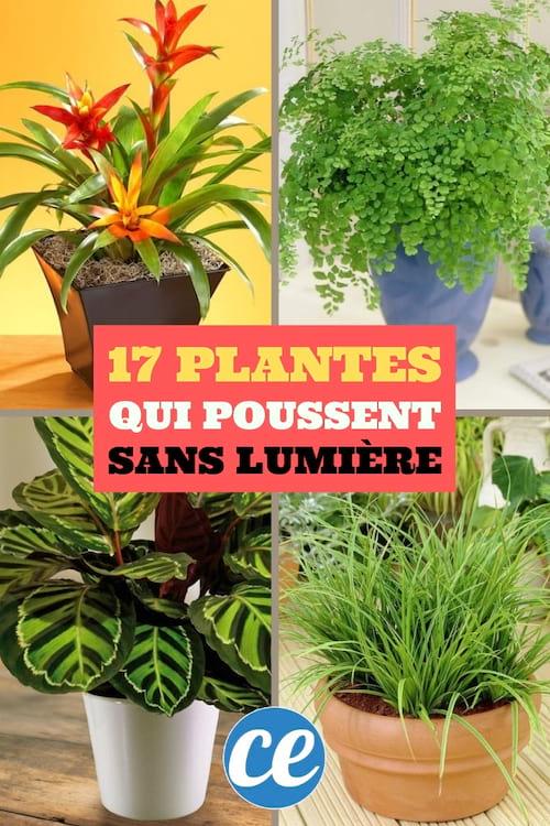 17 plantes d'intérieur qui poussent presque sans lumière directe et sans soleil
