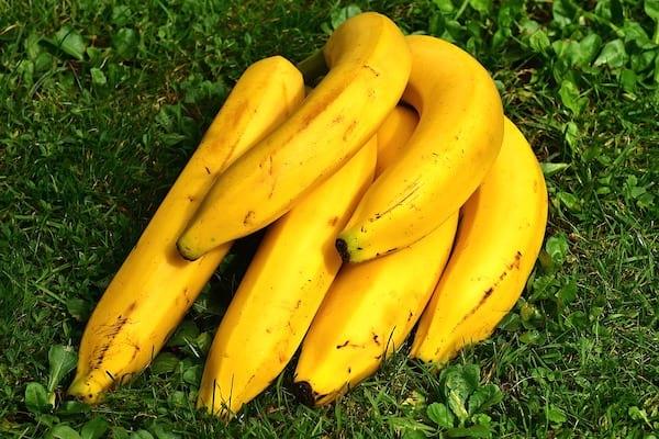 découvrez les bienfaits des bananes sur le sommeil